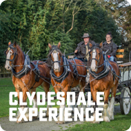 Clydesdale Experience